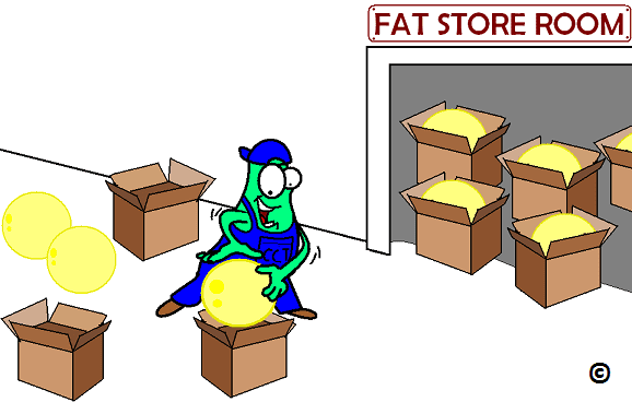 Fat Storage In The Body 65