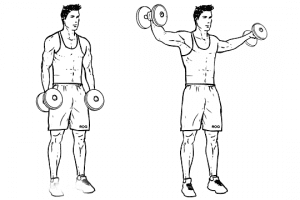 Side Raises (shoulders)