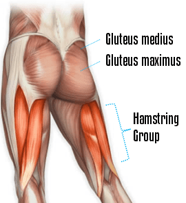 Why train your glutes?
