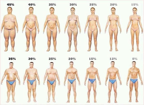body fat scale percentages