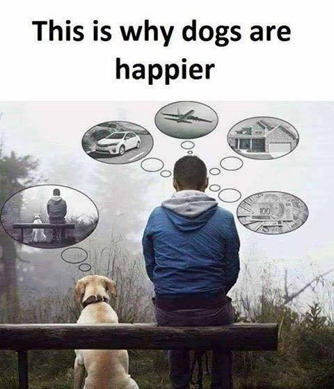 this is why dogs are happier