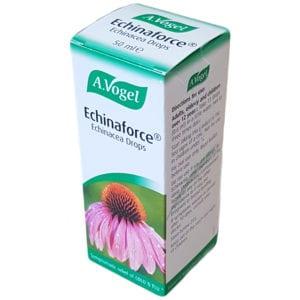 Echinacea for bodybuilders